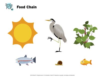 Food Chains Primary Resources - Twinkl