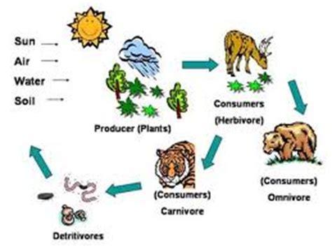 KS2 Science, Feeding Relationships, Food Chains